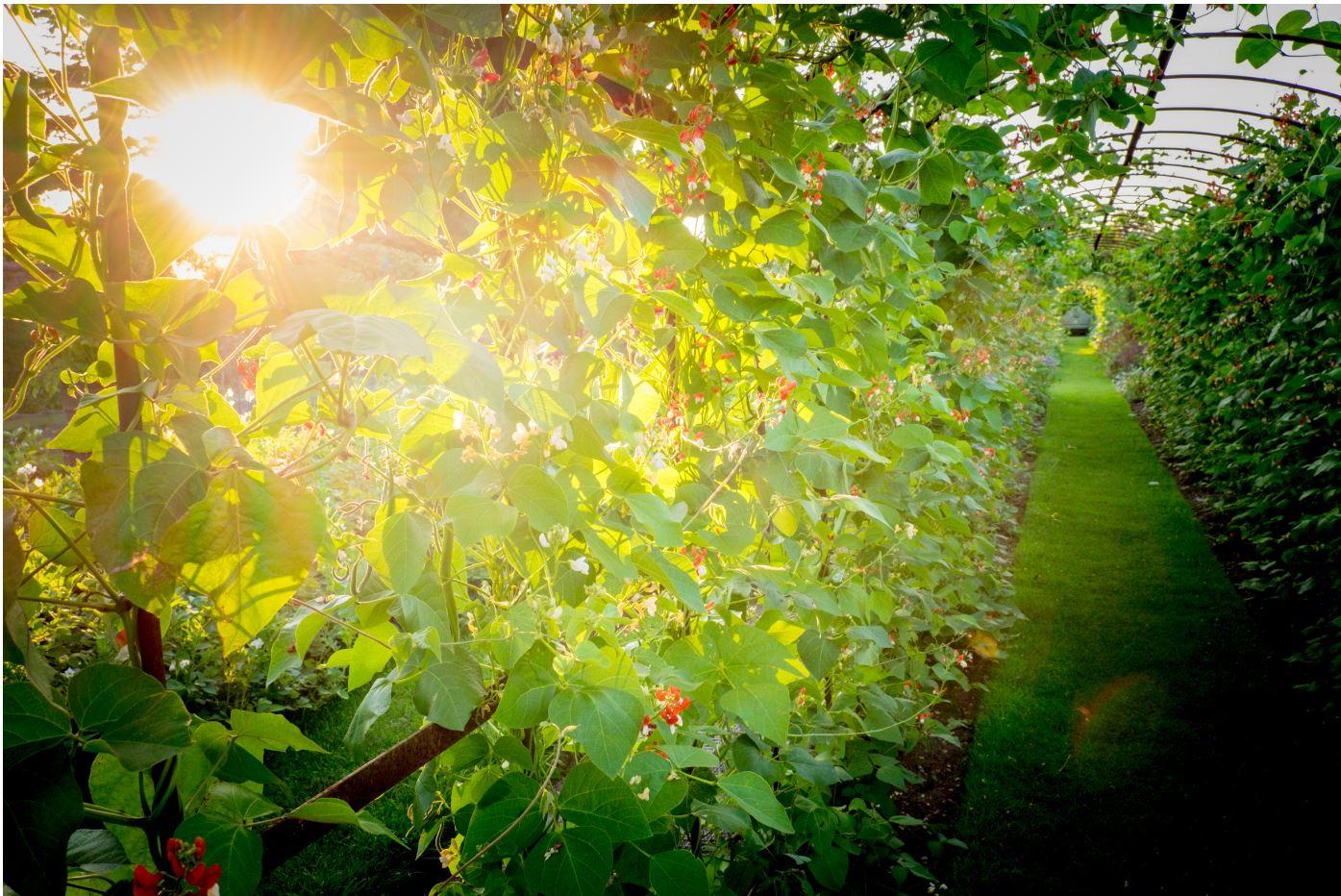 Midsummer Nights 17th June